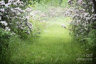 Photograph - Pennsylvania Mountain Laurel Trail by Andrea Hazel Ihlefeld
