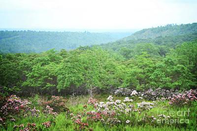 Photograph - Pennsylvania Mountain Wildflowers Landscape by Andrea Hazel Ihlefeld