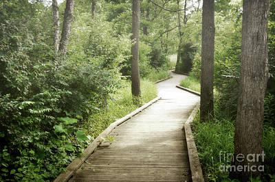 Photograph - Pennsylvania Woodland Boardwalk Landscape by Andrea Hazel Ihlefeld