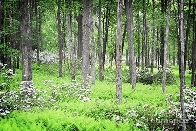 Photograph - Pennsylvania Woodland Forest Wildflowers Landscape by Andrea Hazel Ihlefeld