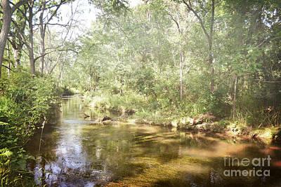 Photograph - Pennsylvania Woodland Stream Landscape by Andrea Hazel Ihlefeld