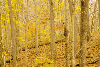 Photograph - Pennsylvania Woodland by Susan Maxwell Schmidt