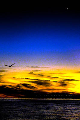 Photograph - Pensacola Gull Set by Jeff Kurtz