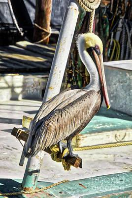 Pensacola Panhandle Pelican Art Print