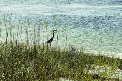 Photograph - Pensacola Shore Bird by Laurie Perry