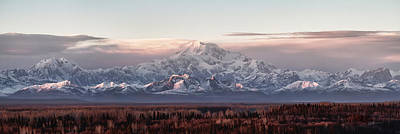 Alaska Photograph - Pensive by Ed Boudreau