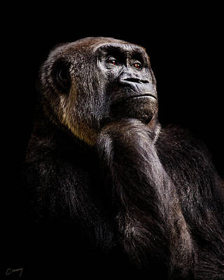 Christina Conway Royalty-Free and Rights-Managed Images - Pensive Gorilla by Christina Conway