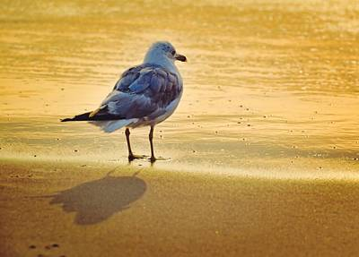 Photograph - Pensive Gull by JAMART Photography