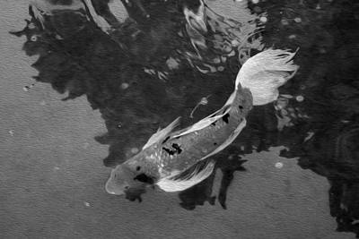 Photograph - Pensive Koi Bw by Bonnie Follett