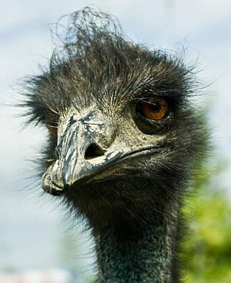 Ostrich Photograph - Pensive Ostrich by Douglas Barnett