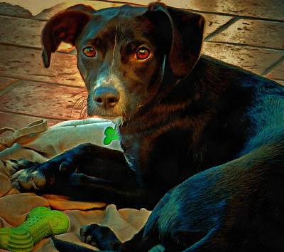 Photograph - Pensive Puppy by Dorothy Berry-Lound
