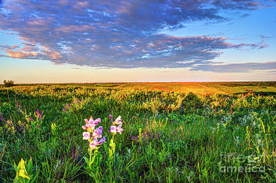 Photograph - Penstemon Abloom In The Flint Hills by Jean Hutchison