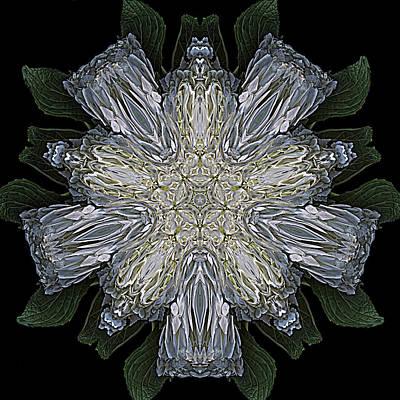 Digital Art - Pentafleur by Cyndy Doty