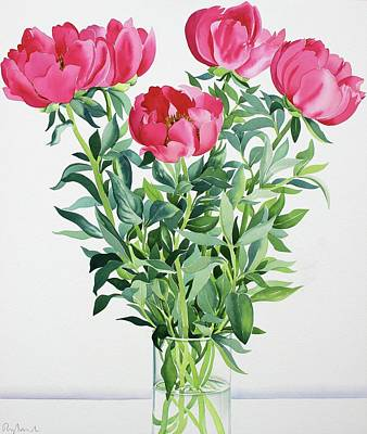 Colorful Drawing - Peonies  by Christopher Ryland