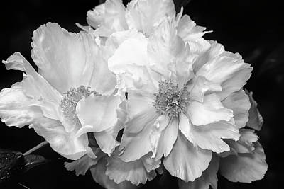 Photograph - Peonies by Eunice Gibb