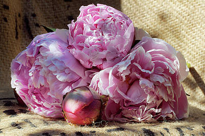 Photograph - Peonies From The Garden by Phyllis Denton
