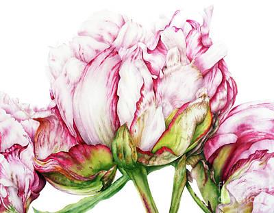 Peonies Art Print by Marie Burke