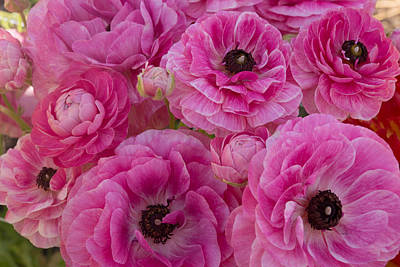 Photograph - Peonies by Robert Brusca