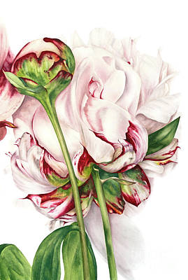 Single Flower Painting - Peony And Bud by Marie Burke