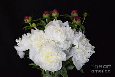 Photograph - Peony Bouquet by Jeannie Rhode