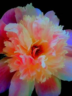 Peony Color Play Art Print by Beth Akerman