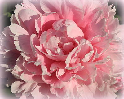Photograph - Peony Dreamy In Pink by Dora Sofia Caputo Photographic Design and Fine Art