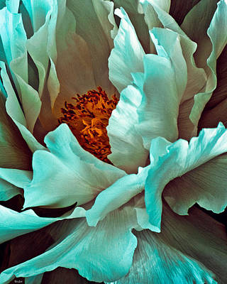 Photograph - Peony Flower by Chris Lord