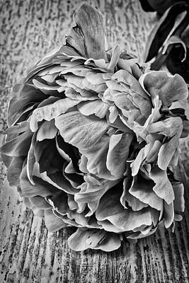 Photograph - Peony In Black And White by Garry Gay