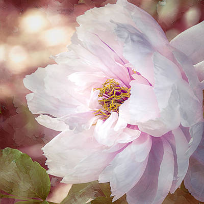 Photograph - Peony In Pink by Julie Palencia
