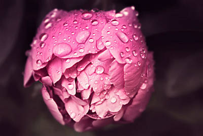 Photograph - Peony In The Rain by Rumiana Nikolova