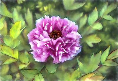 Blossom Photograph - Peony by John K Woodruff