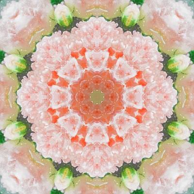 Photograph - Peony Kaleidoscope 1 by Natalie Rotman Cote