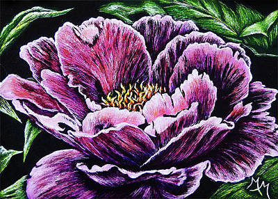Drawing - Peony by Monique Morin Matson