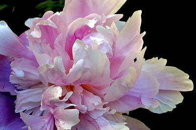 Photograph - Peony On Black by Jodie Marie Anne Richardson Traugott          aka jm-ART