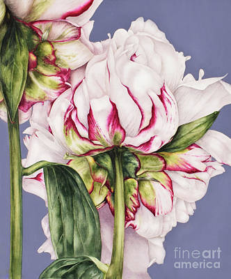 Mums Painting - Peony On Blue by Marie Burke