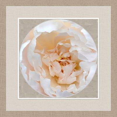 Digital Art - Peony Passion by Darla Wood