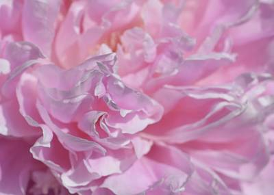 Photograph - Peony Passion No. 1 by Photography by Tiwago