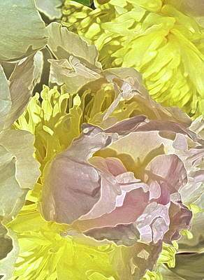 Peony Perfect Print by Gwyn Newcombe