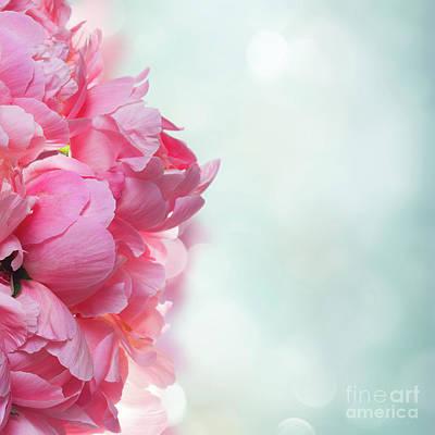 Photograph - Peony Petals by Anastasy Yarmolovich