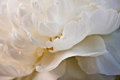 Floral Abstract Photograph - Peony Poetry by Maggie Terlecki