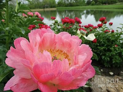 Photograph - Peony Reflection by Rebecca Overton