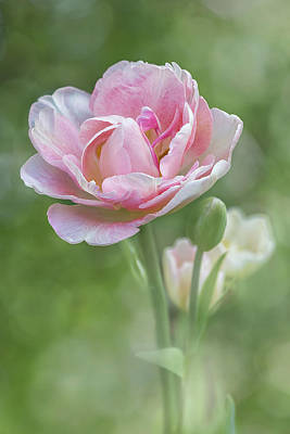 Photograph - Peony Tulip - Vertical Texture by Patti Deters