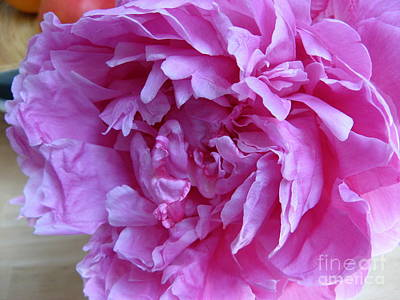 Photograph - Peony Portland by Marlene Rose Besso