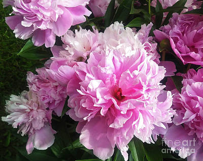 Digital Art - Peony's Beauty by Jasna Dragun