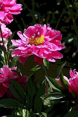 Photograph - Peony's Envy 15 by Allen Beatty