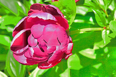 Photograph - Peony's Envy 16 by Allen Beatty
