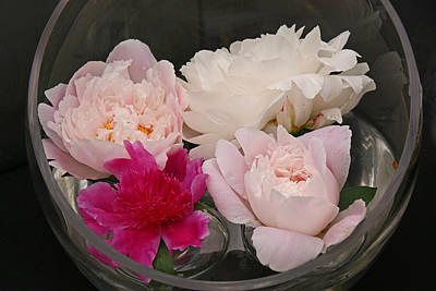 Photograph - Peony's Envy 34 by Allen Beatty