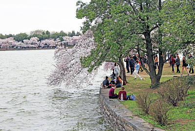Photograph - People Enjoying The Cherry Blossoms by Cora Wandel