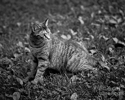 Photograph - Pepper Cat by Patrick M Lynch