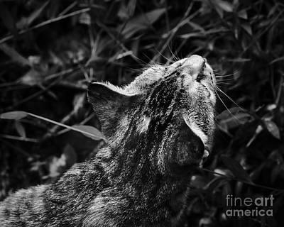 Photograph - Pepper by Patrick M Lynch
